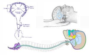 Craniosacralsystem schoonheidsinstituut Sentimiento